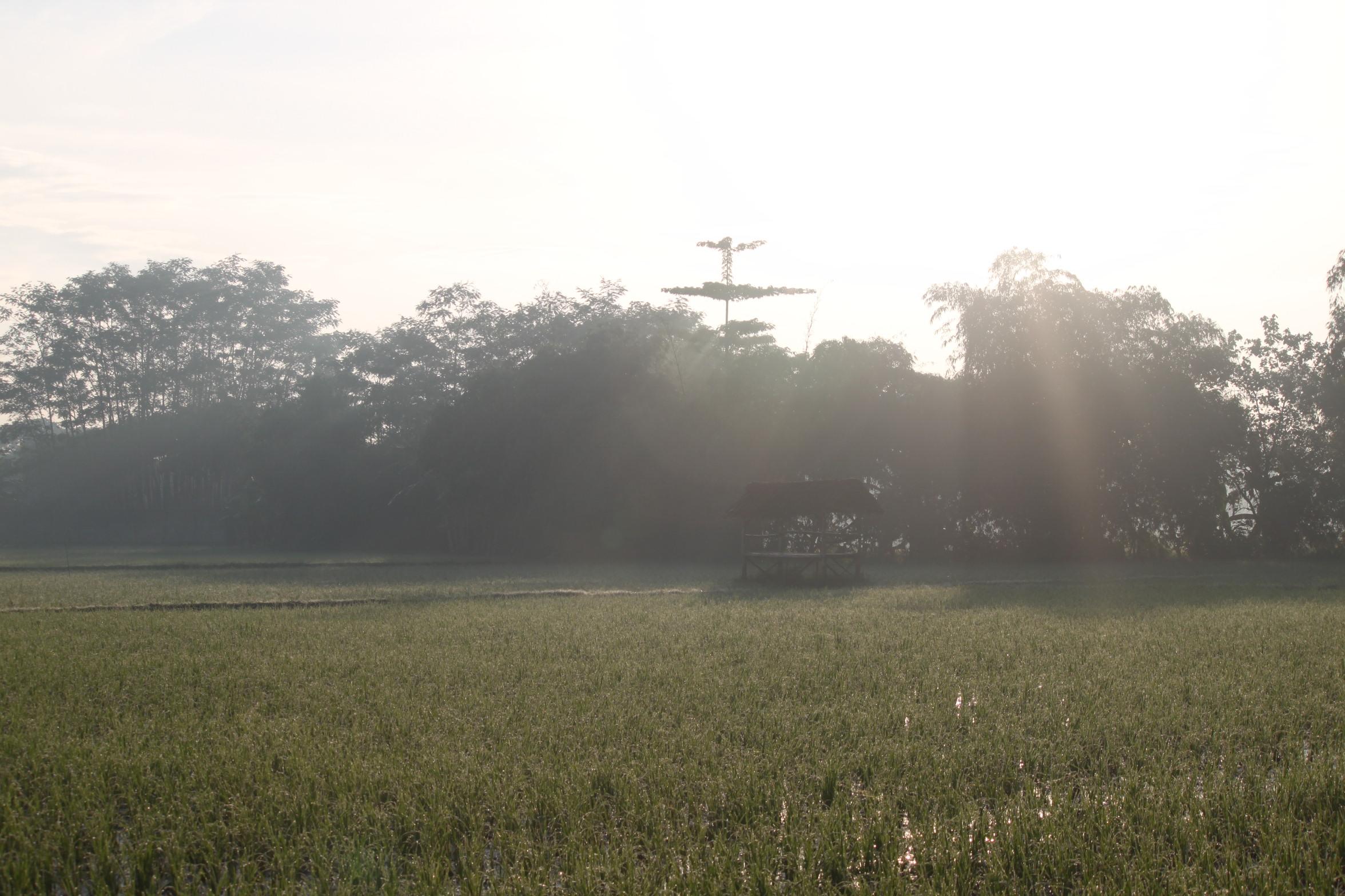 Foto pemandangan alam pedesaan
